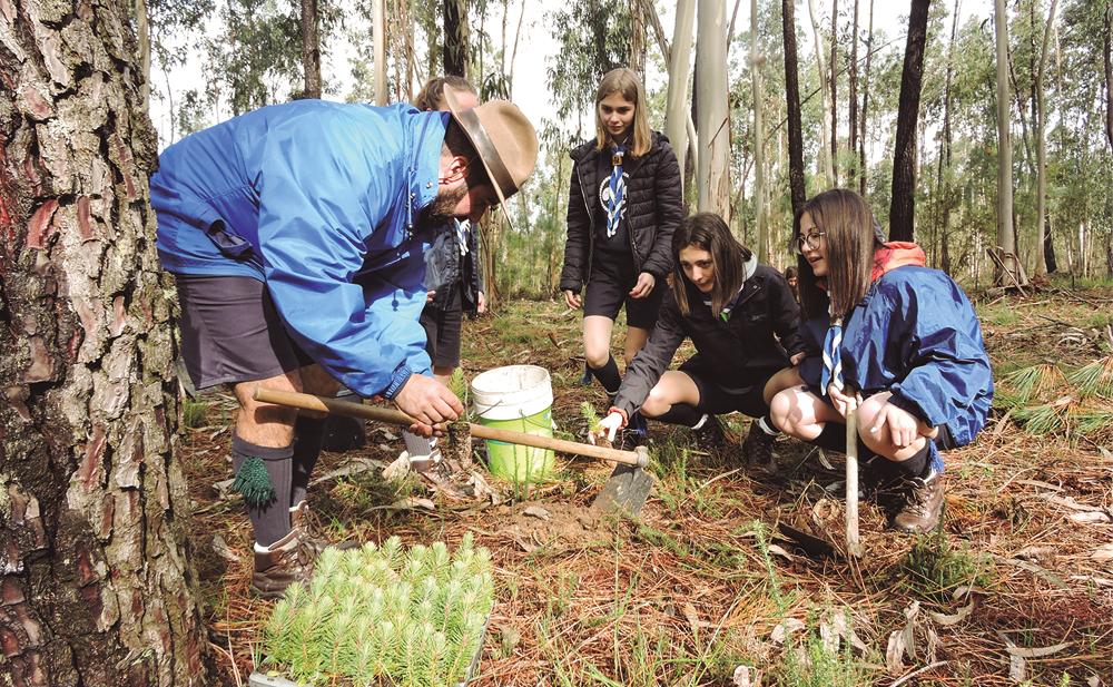 ScoutPine junta perto de 200 escuteiros em plantação.